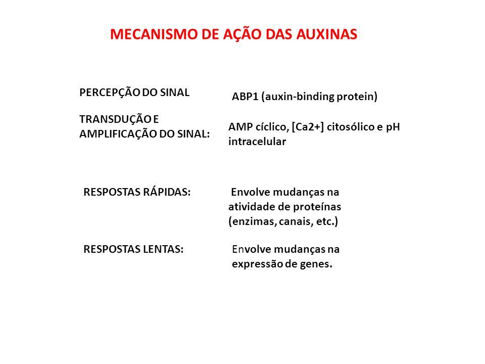 MECANISMO DE AÇÃO DAS AUXINAS