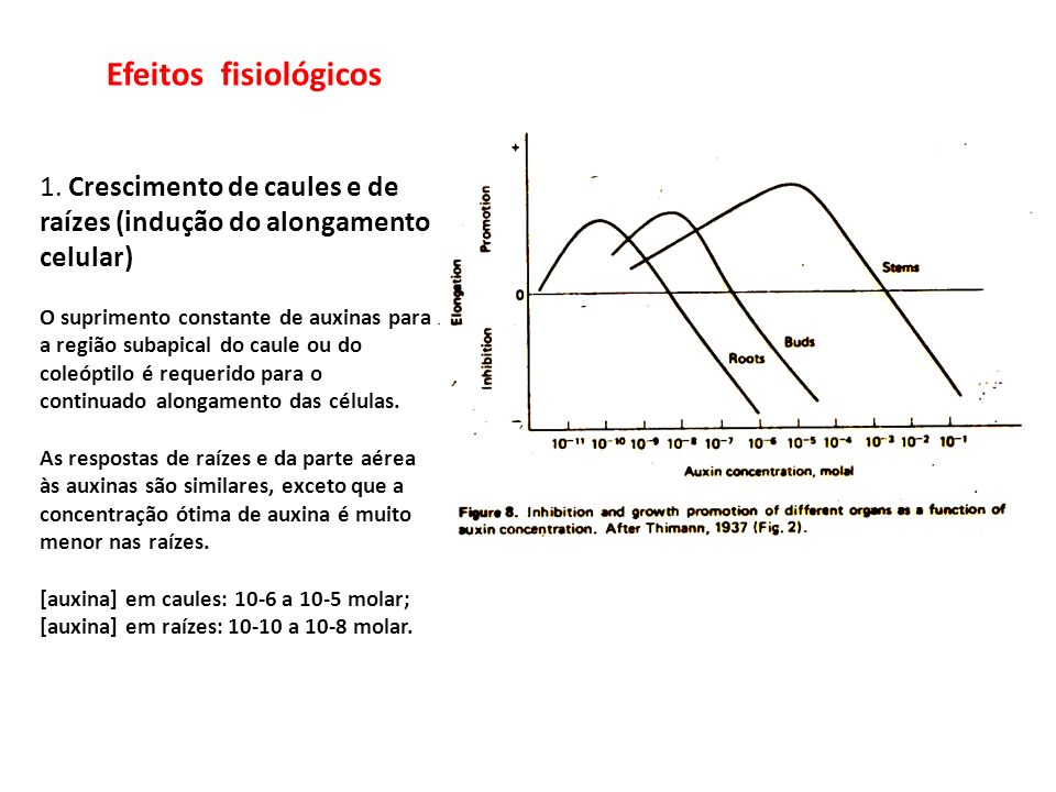 Efeitos fisiológicos 1. Crescimento de caules e de raízes (indução do alongamento celular)