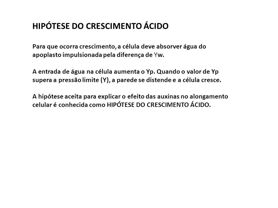 HIPÓTESE DO CRESCIMENTO ÁCIDO