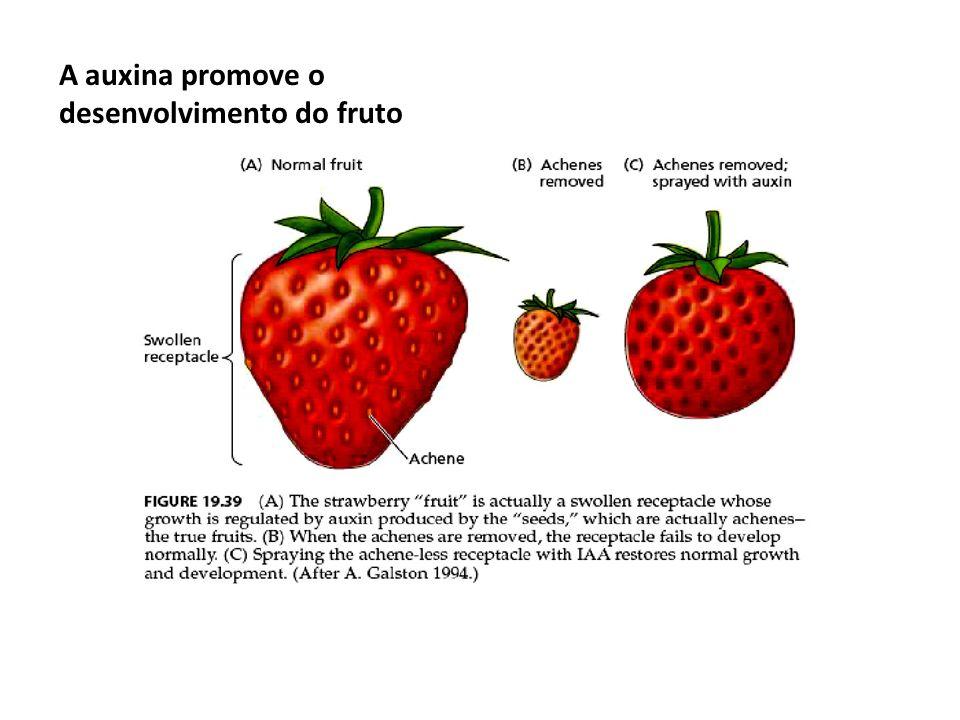 A auxina promove o desenvolvimento do fruto