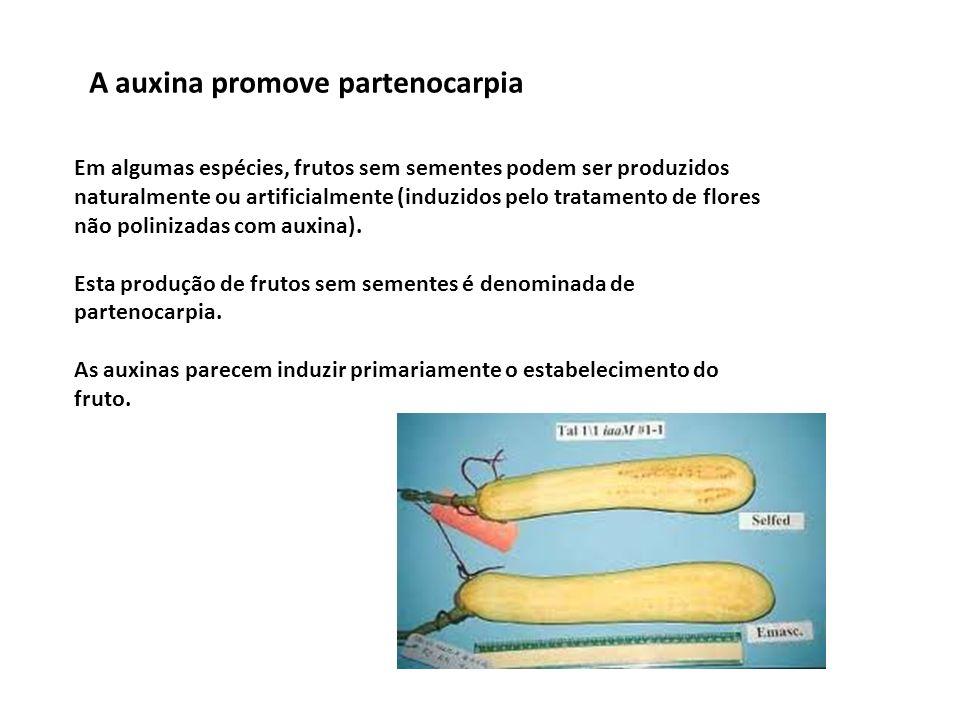 A auxina promove partenocarpia