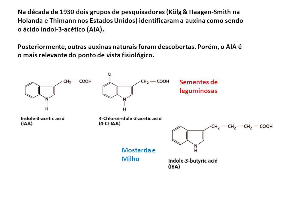 Na década de 1930 dois grupos de pesquisadores (Kölg & Haagen-Smith na Holanda e Thimann nos Estados Unidos) identificaram a auxina como sendo o ácido indol-3-acético (AIA).