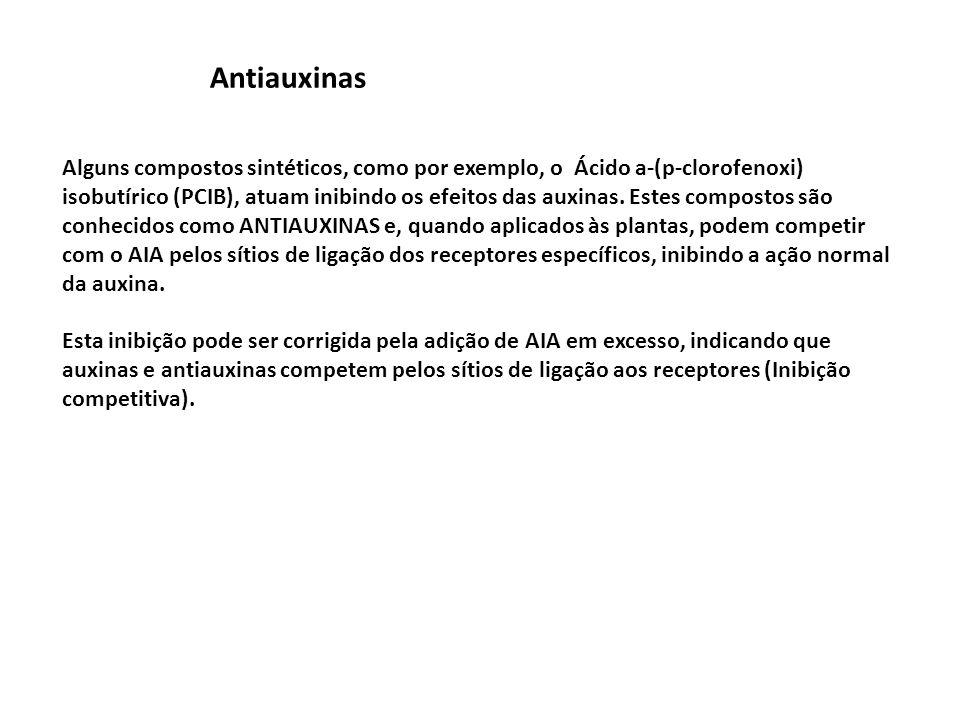 Antiauxinas