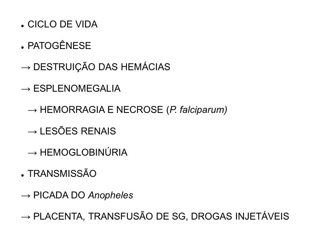 CICLO DE VIDA PATOGÊNESE. → DESTRUIÇÃO DAS HEMÁCIAS. → ESPLENOMEGALIA. → HEMORRAGIA E NECROSE (P. falciparum)