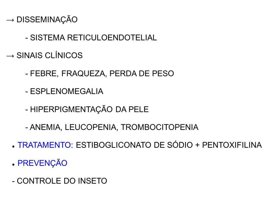 → DISSEMINAÇÃO- SISTEMA RETICULOENDOTELIAL. → SINAIS CLÍNICOS. - FEBRE, FRAQUEZA, PERDA DE PESO. - ESPLENOMEGALIA.