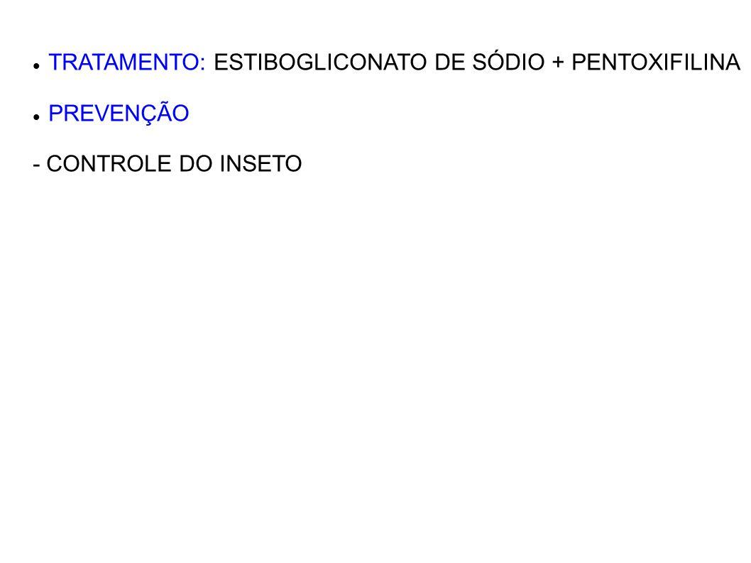 TRATAMENTO: ESTIBOGLICONATO DE SÓDIO + PENTOXIFILINA