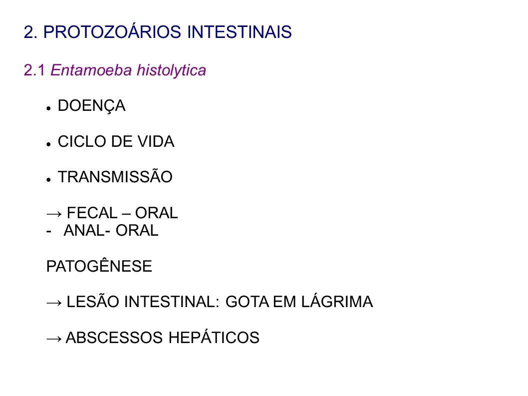2. PROTOZOÁRIOS INTESTINAIS