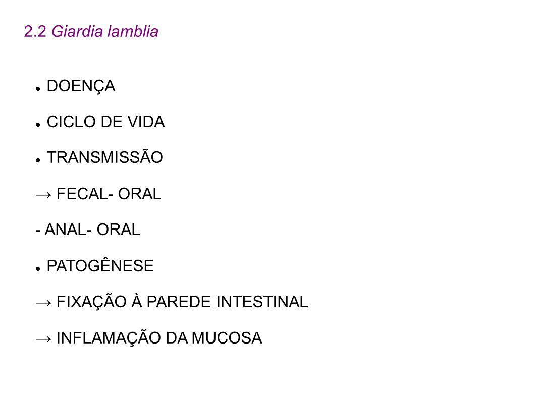 2.2 Giardia lambliaDOENÇA. CICLO DE VIDA. TRANSMISSÃO. → FECAL- ORAL. - ANAL- ORAL. PATOGÊNESE. → FIXAÇÃO À PAREDE INTESTINAL.