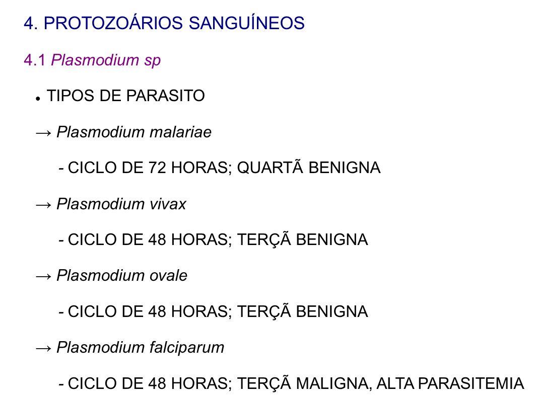 4. PROTOZOÁRIOS SANGUÍNEOS