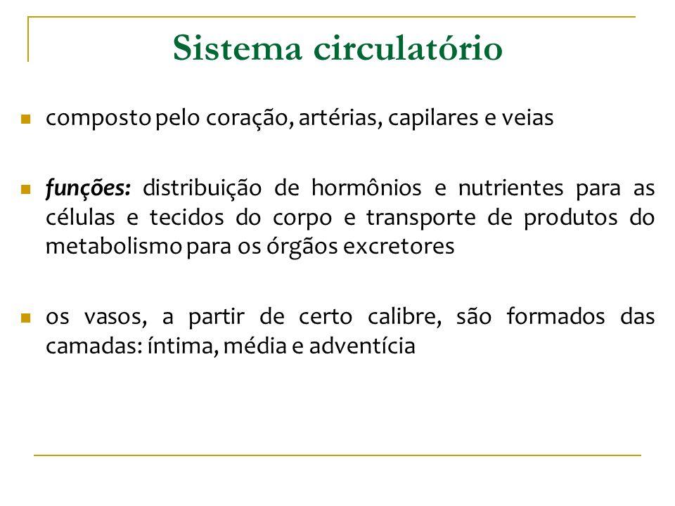 Sistema circulatório composto pelo coração, artérias, capilares e veias.