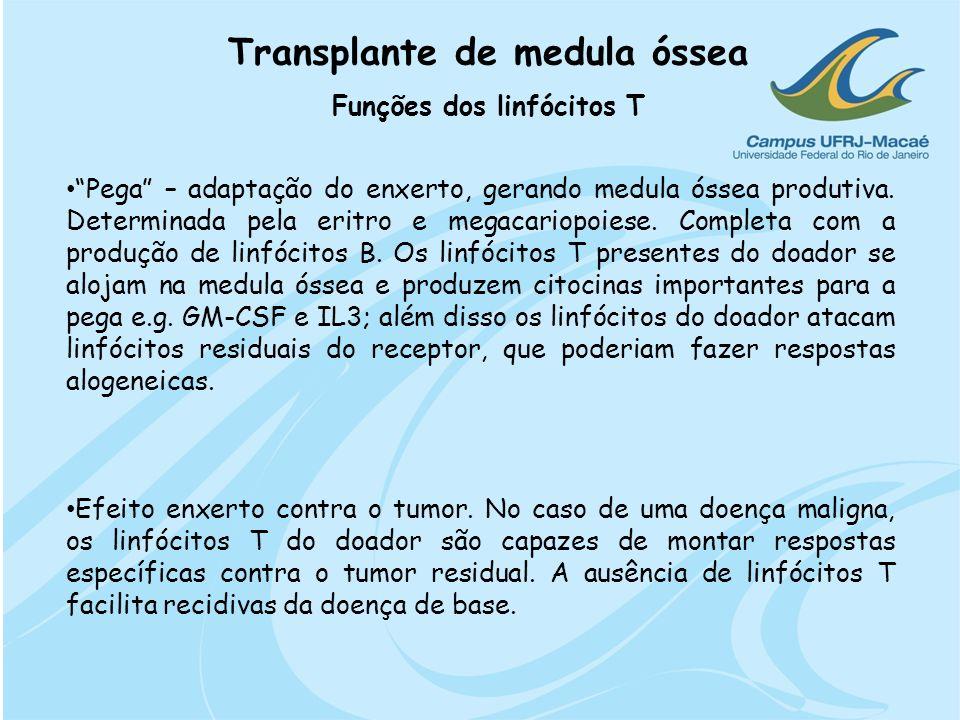 Transplante de medula óssea Funções dos linfócitos T