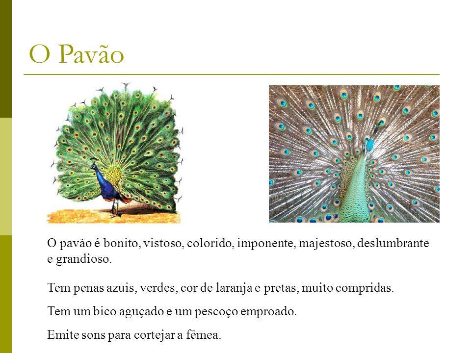 O Pavão O pavão é bonito, vistoso, colorido, imponente, majestoso, deslumbrante e grandioso.