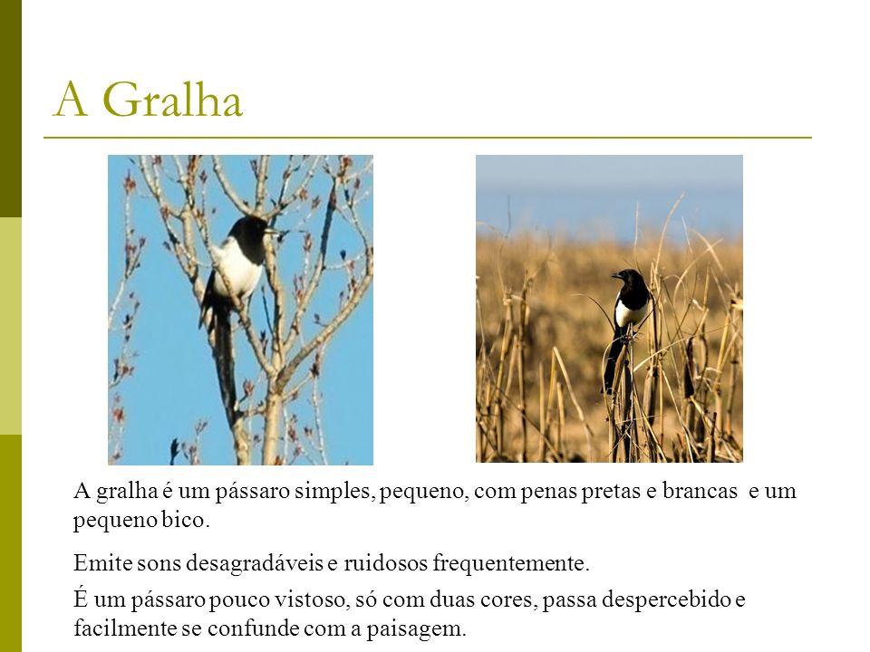 A GralhaA gralha é um pássaro simples, pequeno, com penas pretas e brancas e um pequeno bico. Emite sons desagradáveis e ruidosos frequentemente.