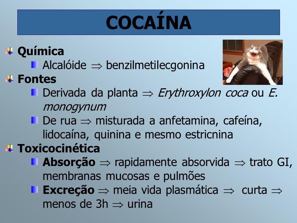 COCAÍNA Química Alcalóide  benzilmetilecgonina Fontes