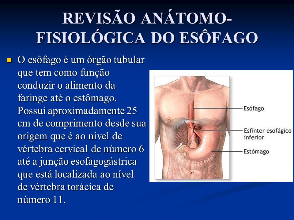 REVISÃO ANÁTOMO-FISIOLÓGICA DO ESÔFAGO