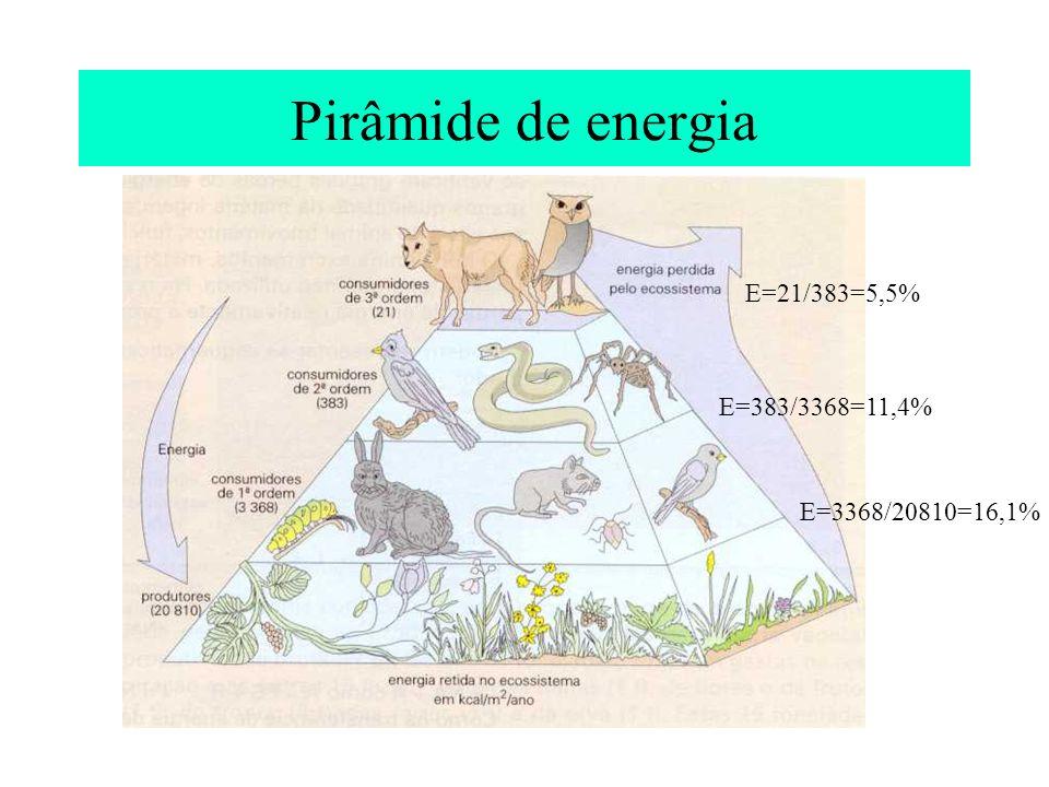 Pirâmide de energia E=21/383=5,5% E=383/3368=11,4% E=3368/20810=16,1%