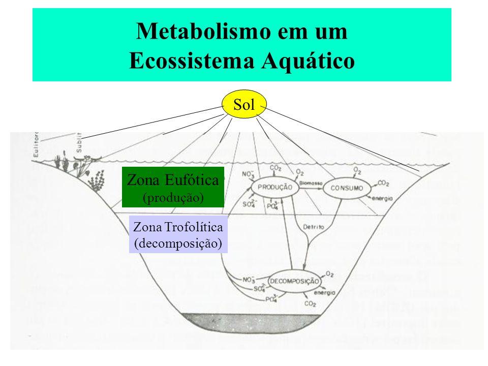 Metabolismo em um Ecossistema Aquático