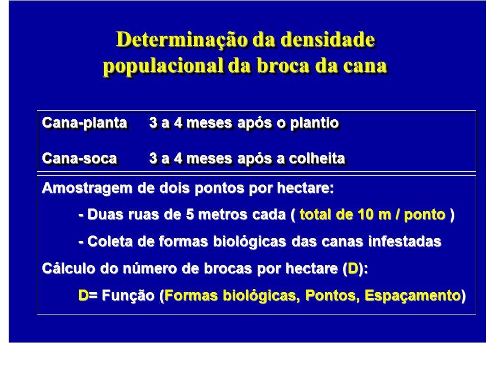 Determinação da densidade populacional da broca da cana
