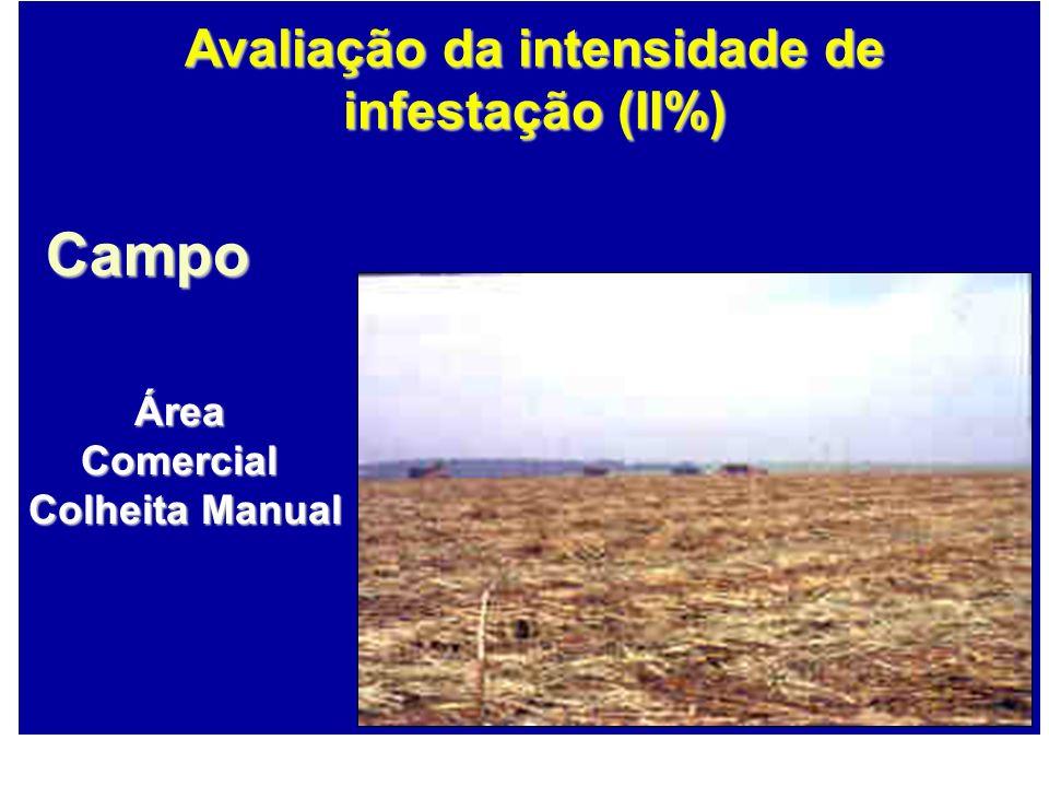 Avaliação da intensidade de infestação (II%)