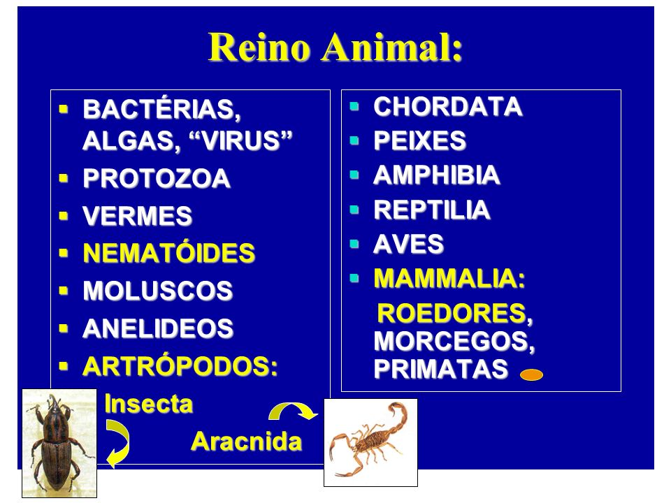 Reino Animal: BACTÉRIAS, ALGAS, VIRUS PROTOZOA VERMES NEMATÓIDES