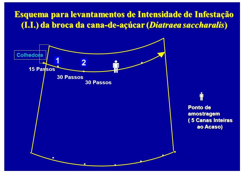 Esquema para levantamentos de Intensidade de Infestação (I. I