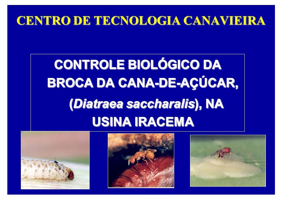 CENTRO DE TECNOLOGIA CANAVIEIRA