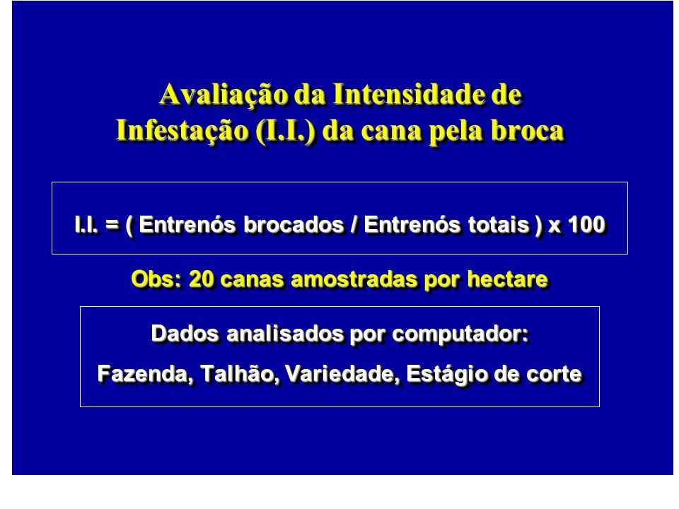 Avaliação da Intensidade de Infestação (I.I.) da cana pela broca