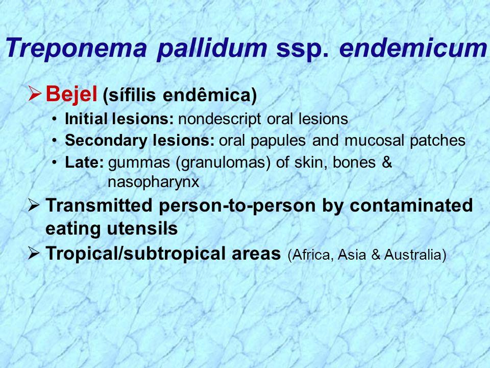 Treponema pallidum ssp. endemicum