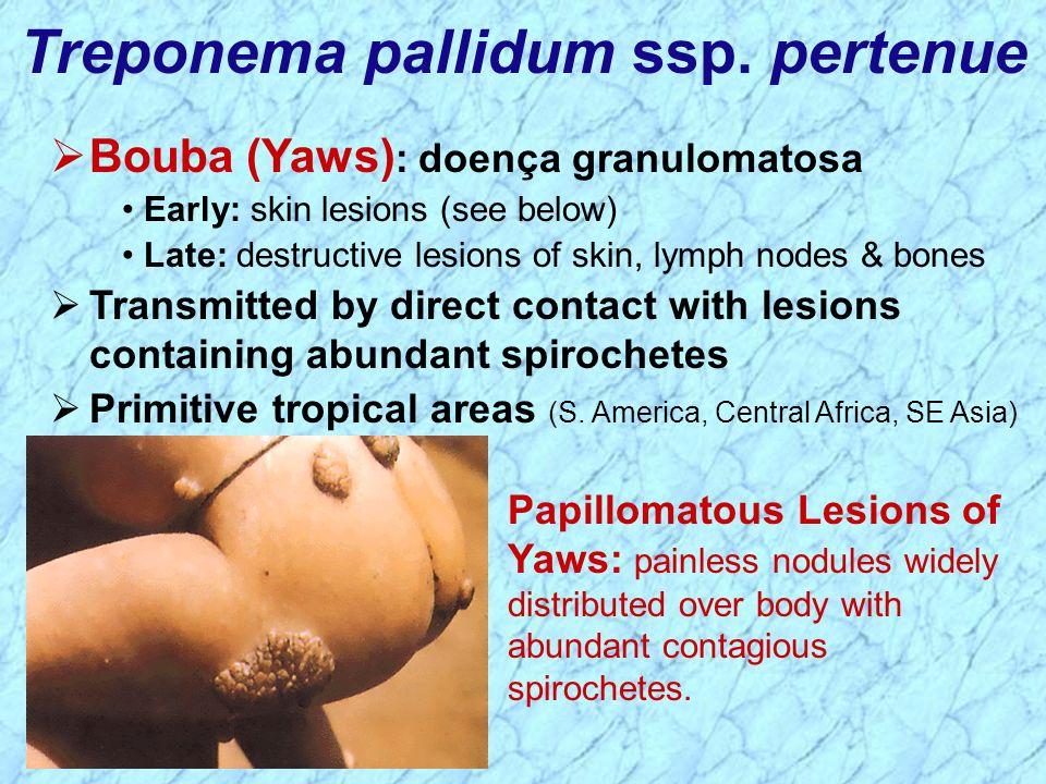 Treponema pallidum ssp. pertenue