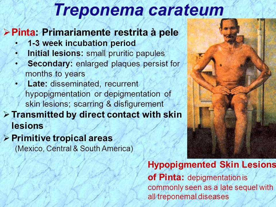 Treponema carateum Pinta: Primariamente restrita à pele