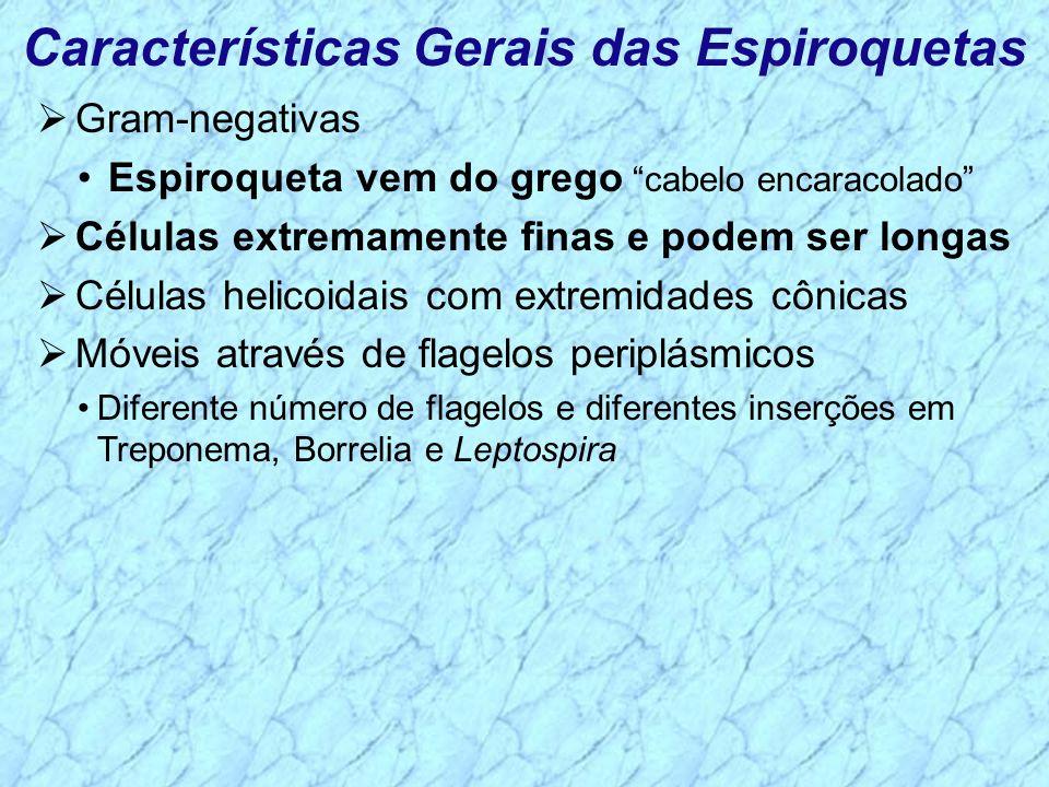 Características Gerais das Espiroquetas