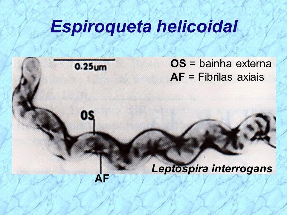 Espiroqueta helicoidal