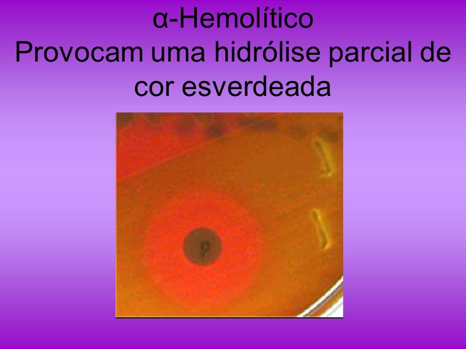 α-Hemolítico Provocam uma hidrólise parcial de cor esverdeada