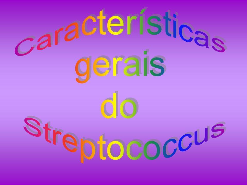 Características gerais do Streptococcus