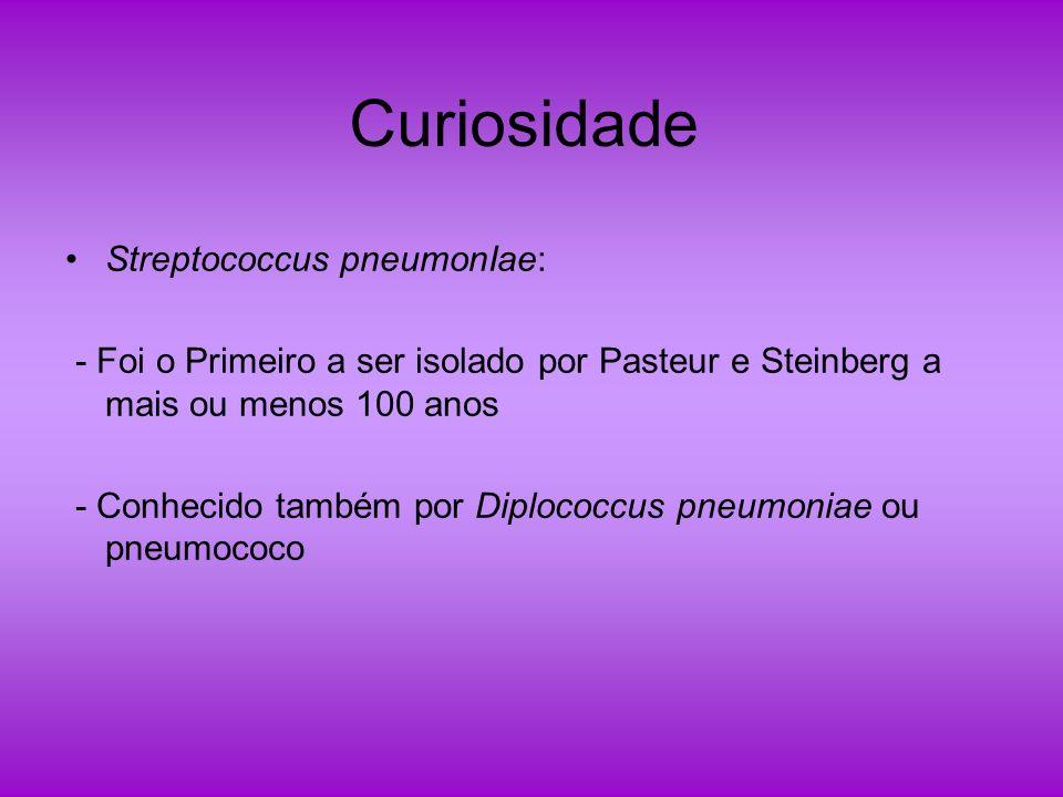 Curiosidade Streptococcus pneumonIae: