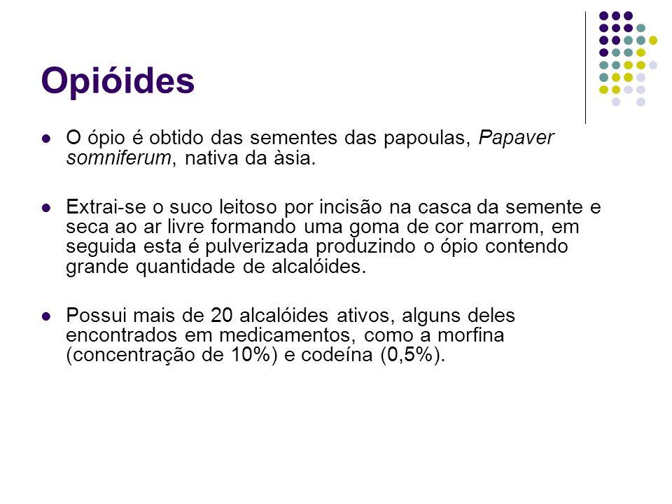 Opióides O ópio é obtido das sementes das papoulas, Papaver somniferum, nativa da àsia.