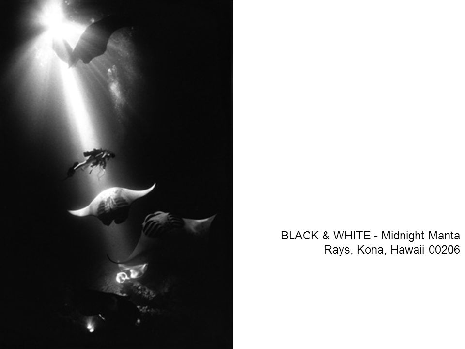 BLACK & WHITE - Midnight Manta Rays, Kona, Hawaii 00206