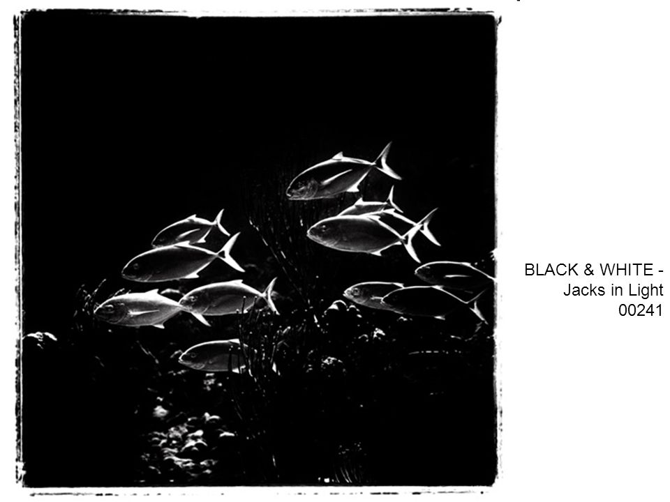 BLACK & WHITE - Jacks in Light 00241