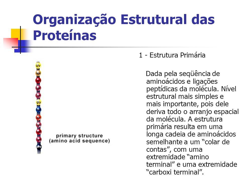 Organização Estrutural das Proteínas