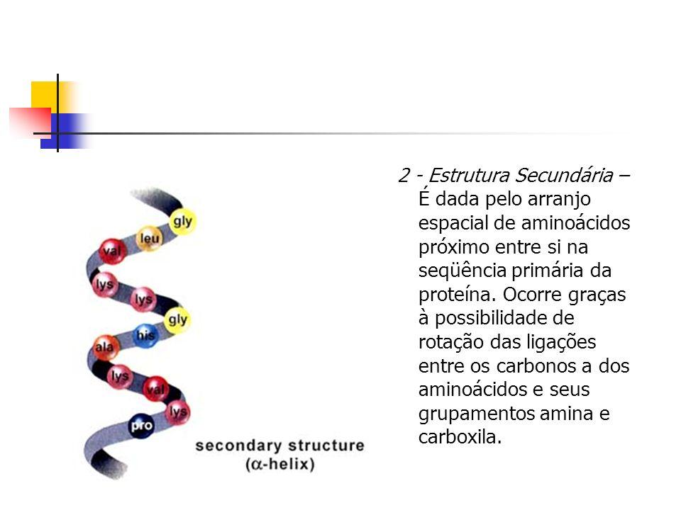 2 - Estrutura Secundária – É dada pelo arranjo espacial de aminoácidos próximo entre si na seqüência primária da proteína.