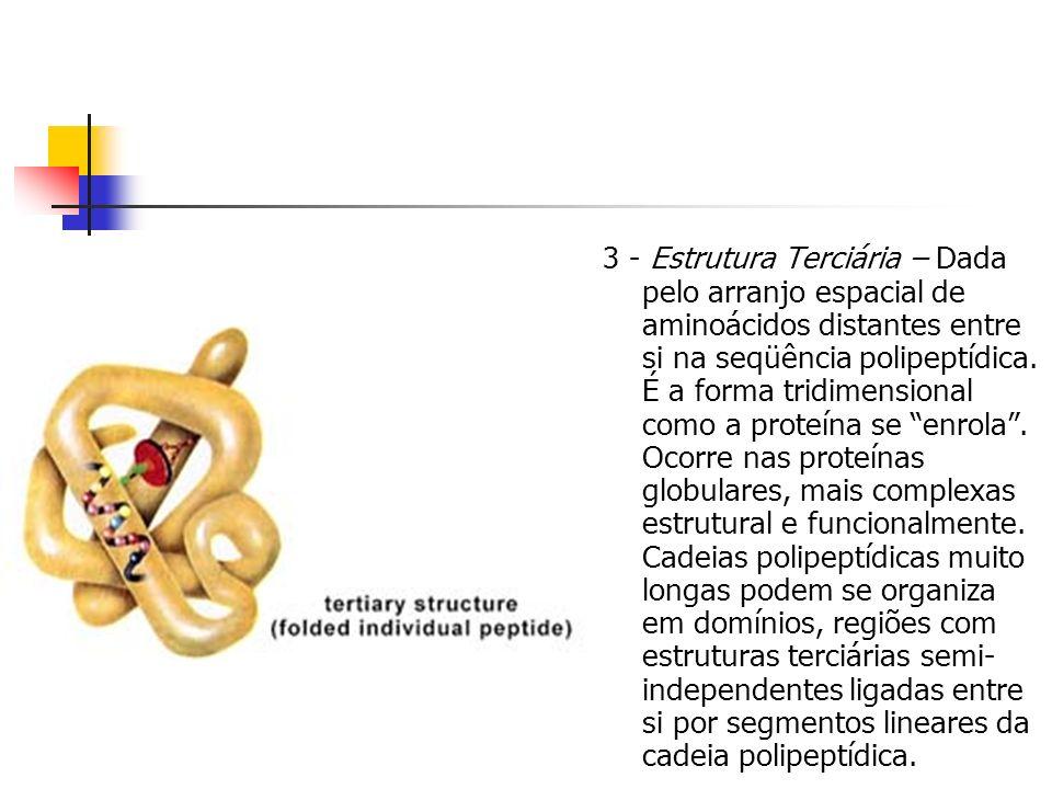 3 - Estrutura Terciária – Dada pelo arranjo espacial de aminoácidos distantes entre si na seqüência polipeptídica.