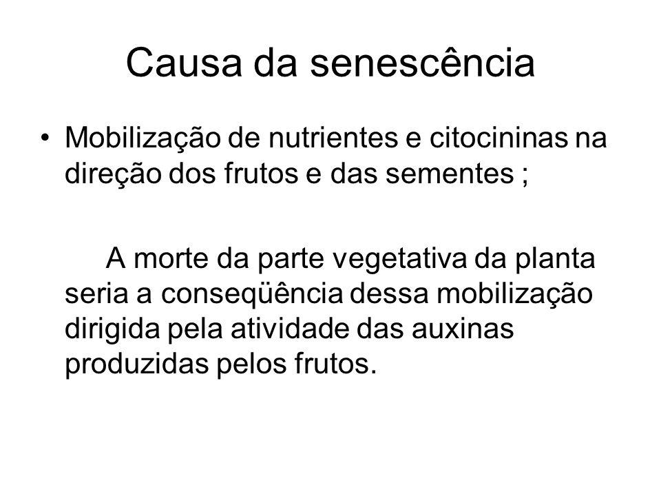 Causa da senescência Mobilização de nutrientes e citocininas na direção dos frutos e das sementes ;