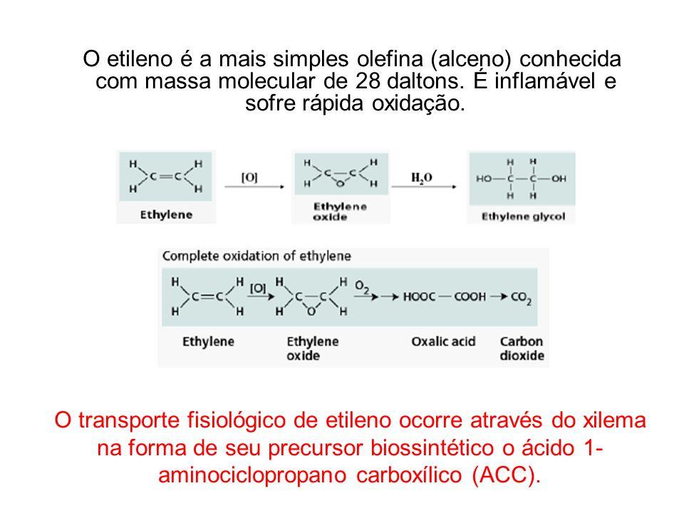 O etileno é a mais simples olefina (alceno) conhecida com massa molecular de 28 daltons. É inflamável e sofre rápida oxidação.