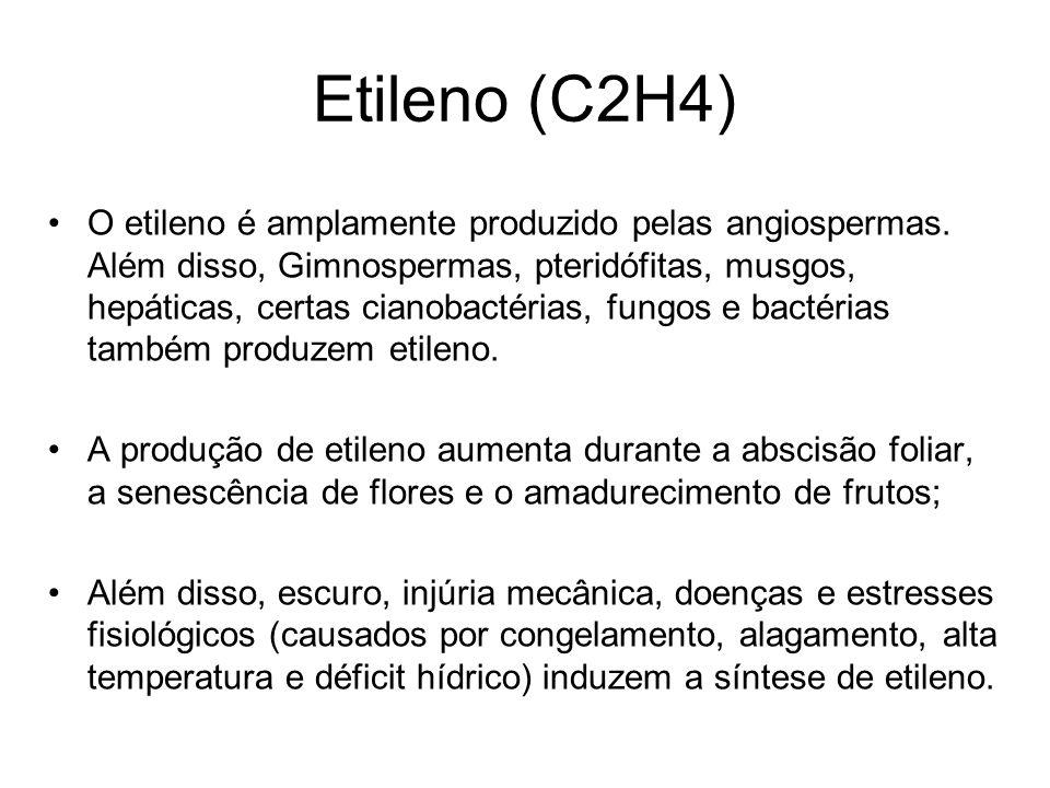 Etileno (C2H4)