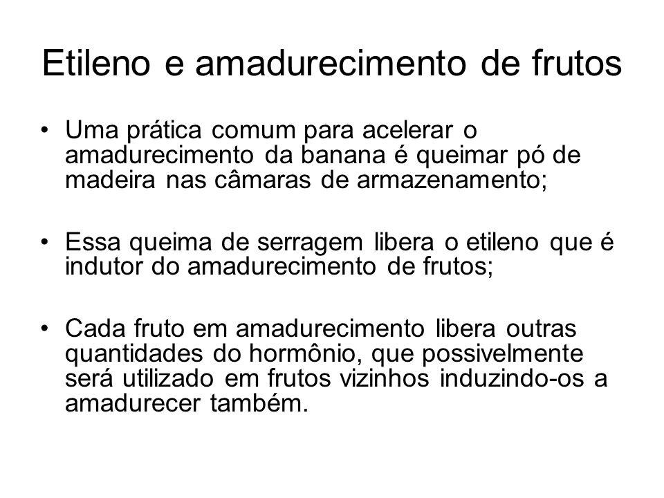 Etileno e amadurecimento de frutos