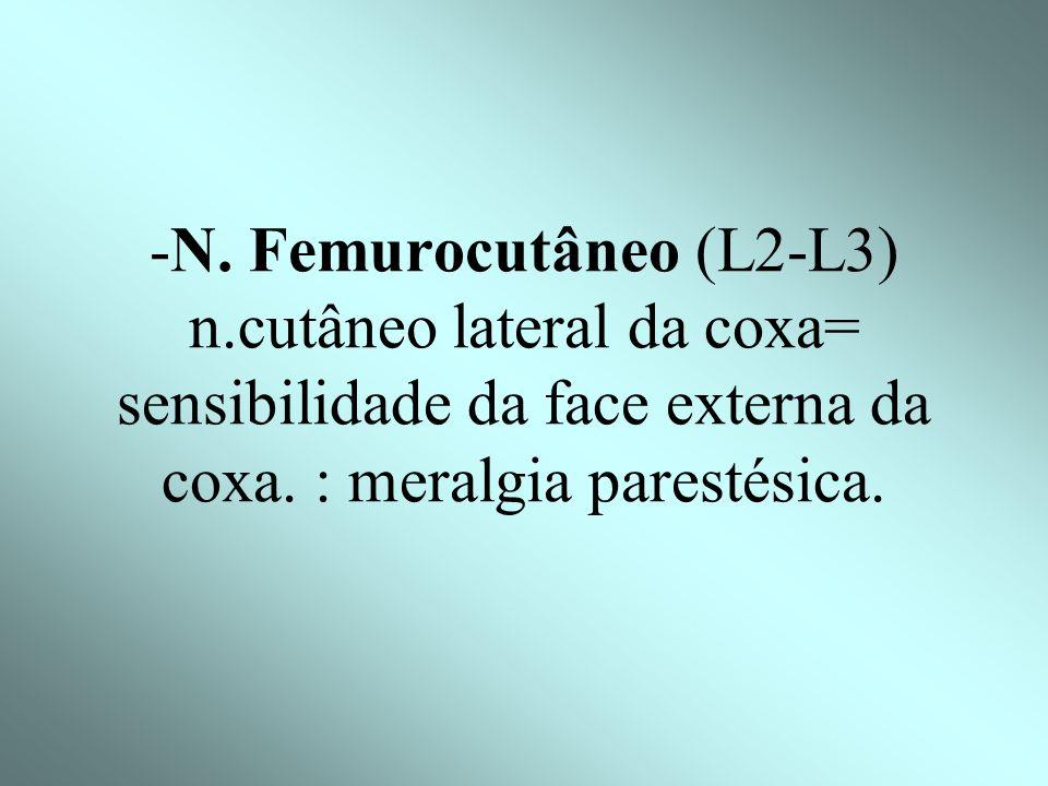 -N. Femurocutâneo (L2-L3) n