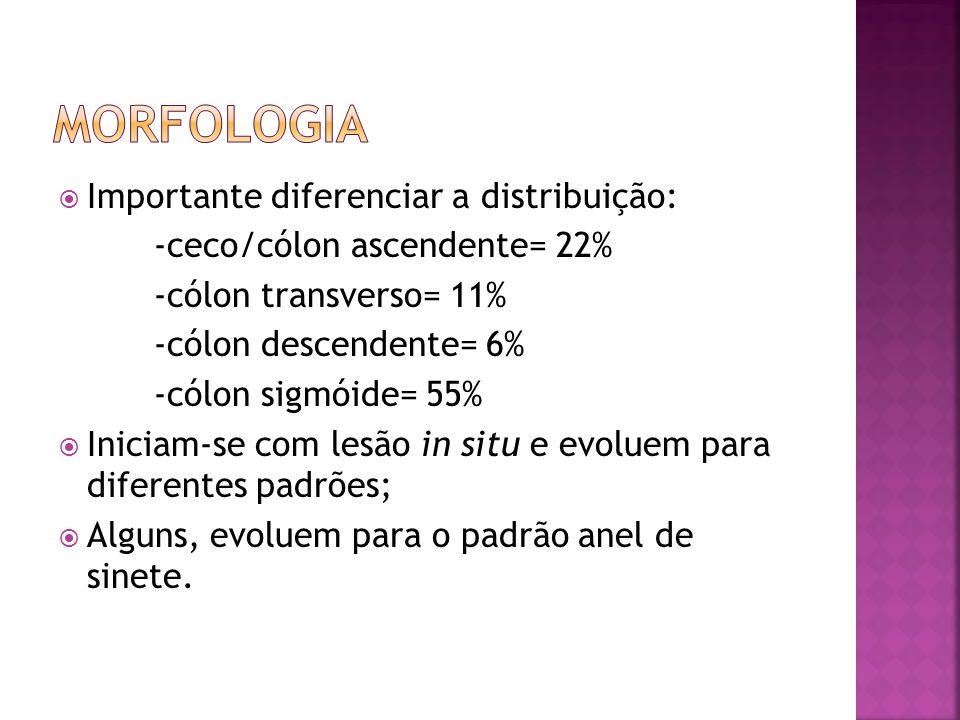 Morfologia Importante diferenciar a distribuição: