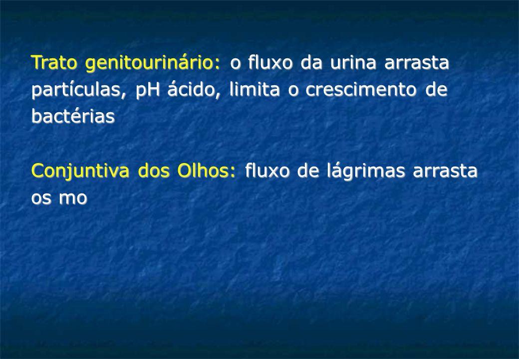 Trato genitourinário: o fluxo da urina arrasta