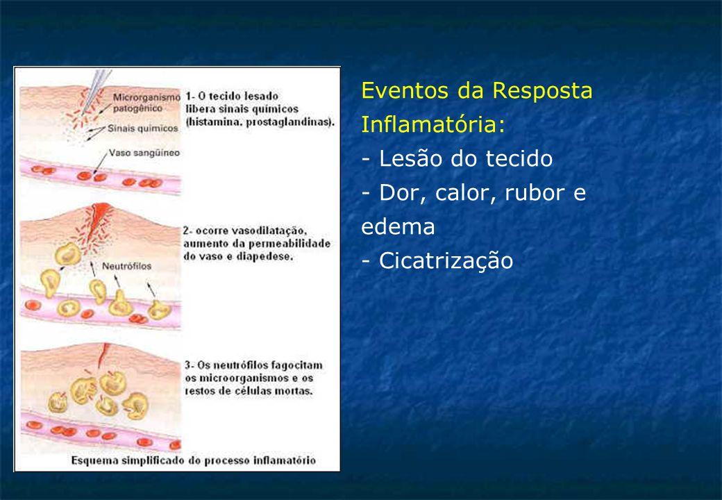 Eventos da Resposta Inflamatória: - Lesão do tecido - Dor, calor, rubor e edema - Cicatrização
