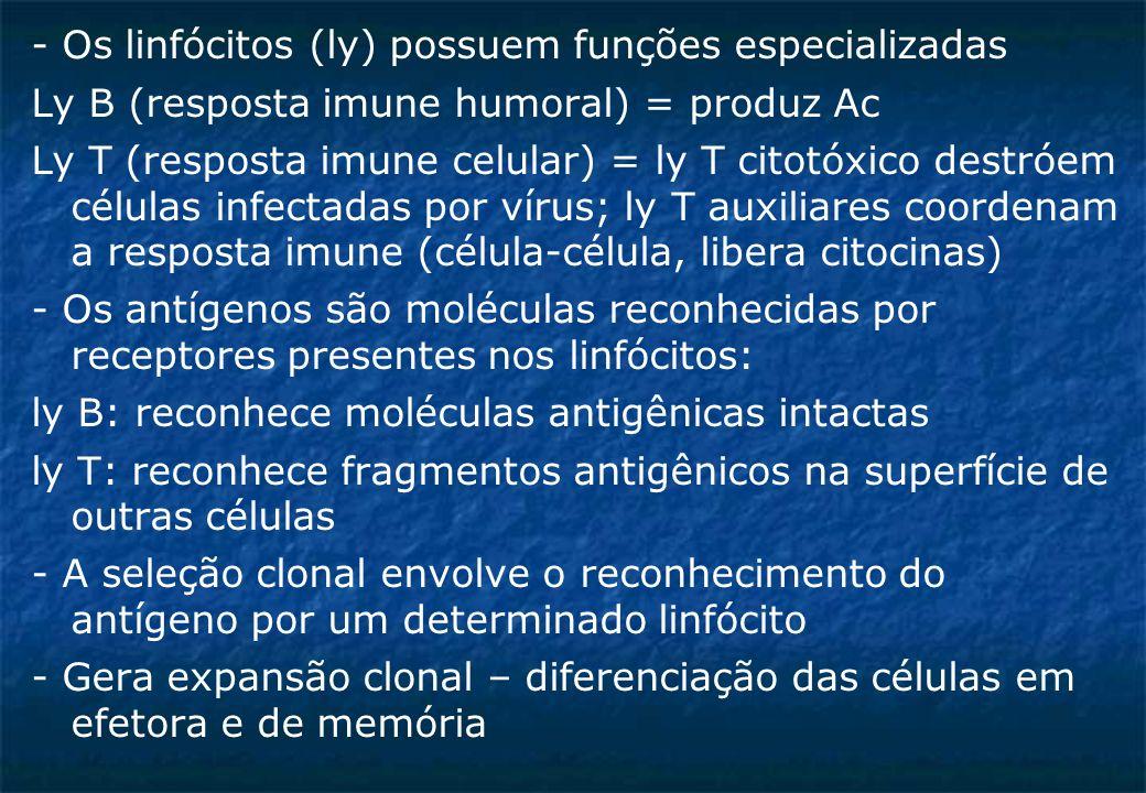 - Os linfócitos (ly) possuem funções especializadas